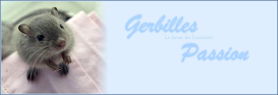Gerbilles Passion