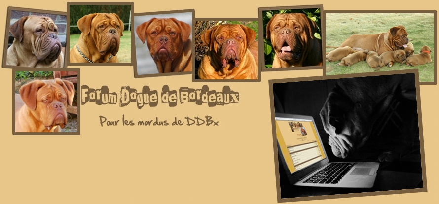 Forum Dogue de Bordeaux