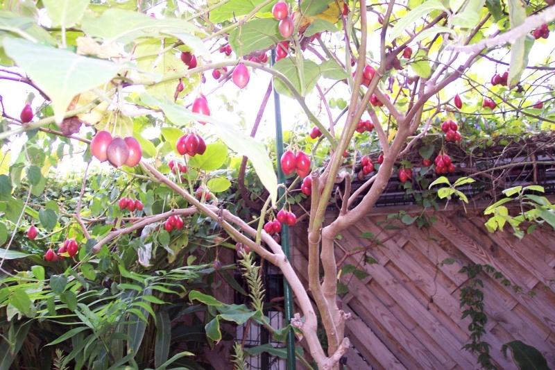Comment planter un noyau de mangue mangue comment planter un noyau de mangue dcouverte duune - Planter un noyau de litchi ...