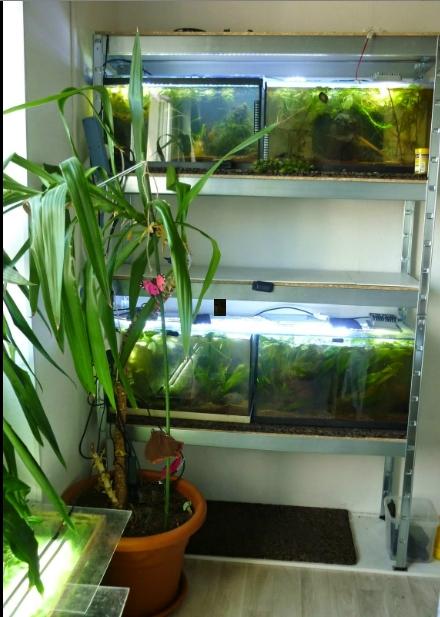 exhausteur aquarium maison