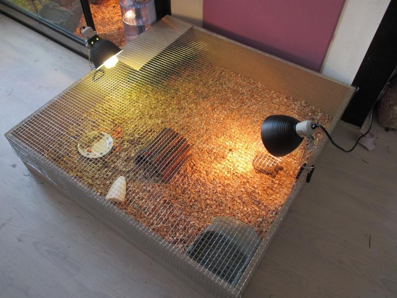 Lampe chauffante et uv pour tortue design de maison - Lampe chauffante tortue ...