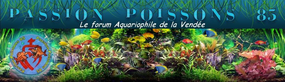 Passion-Poissons 85