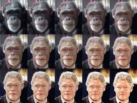 Hasil gambar untuk gambar evolusi darwin