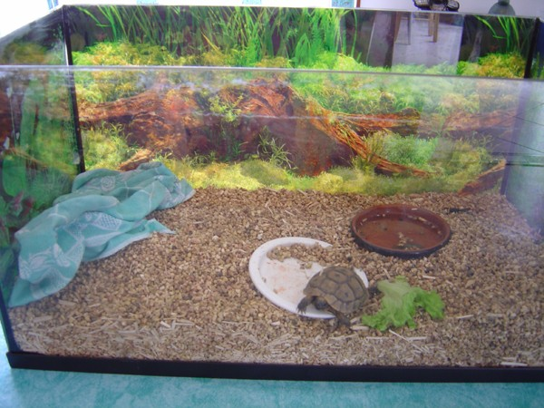 Aquarium pour tortue terre for Aquarium tortue