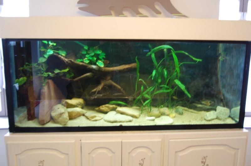 Bacs z 39 et poissons de ptitseb page 2 for Grand bac a poisson