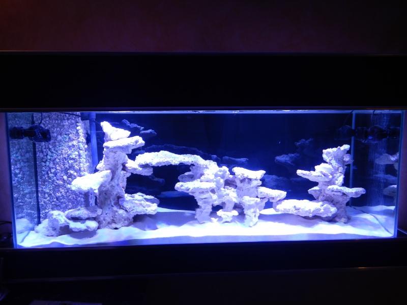 décor aquarium aquaroche