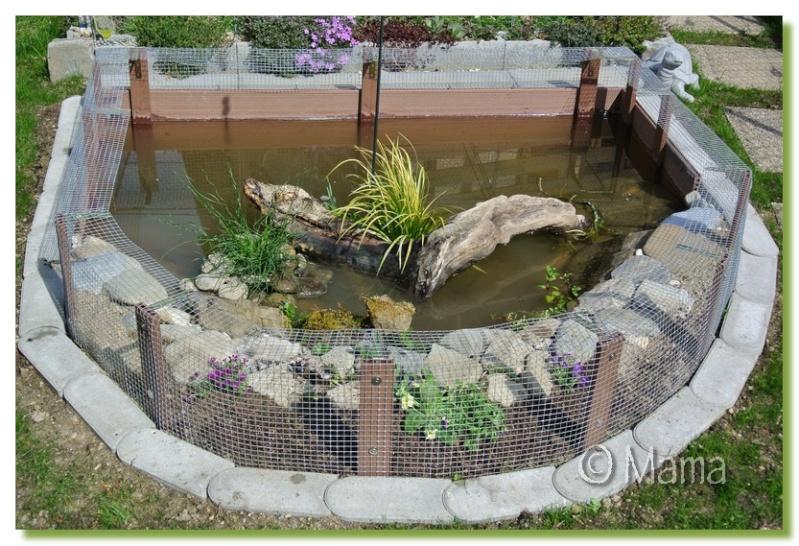 Exemples de bassins ext rieurs pour aquatiques for Bassin exterieur pour tortue de floride