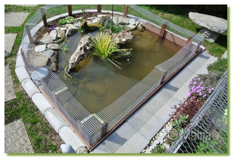 Exemples de bassins ext rieurs pour aquatiques for Modele de rocaille pour jardin