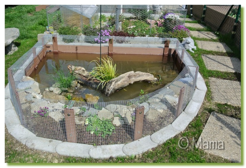 Exemples de bassins ext rieurs pour aquatiques for Bassin exterieur pour tortue