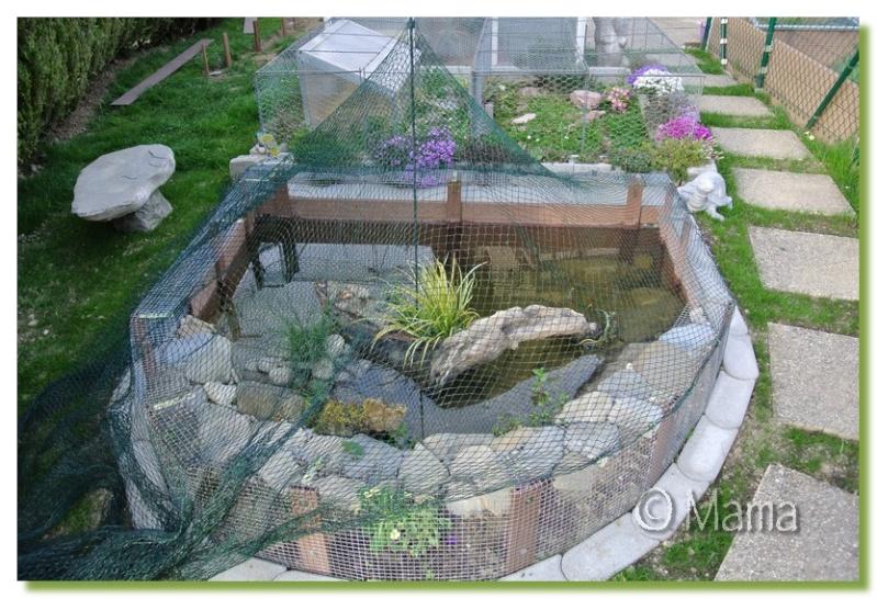 Exemples de bassins ext rieurs pour aquatiques for Amenagement jardin pour tortue