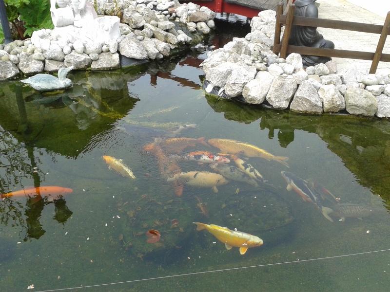 Les bassins de jean michel for Coque bassin poisson