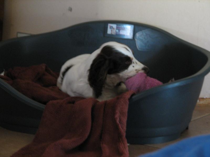 Pipi de chien sur canape en tissu 28 images canap 233 for Pipi de chien sur carrelage