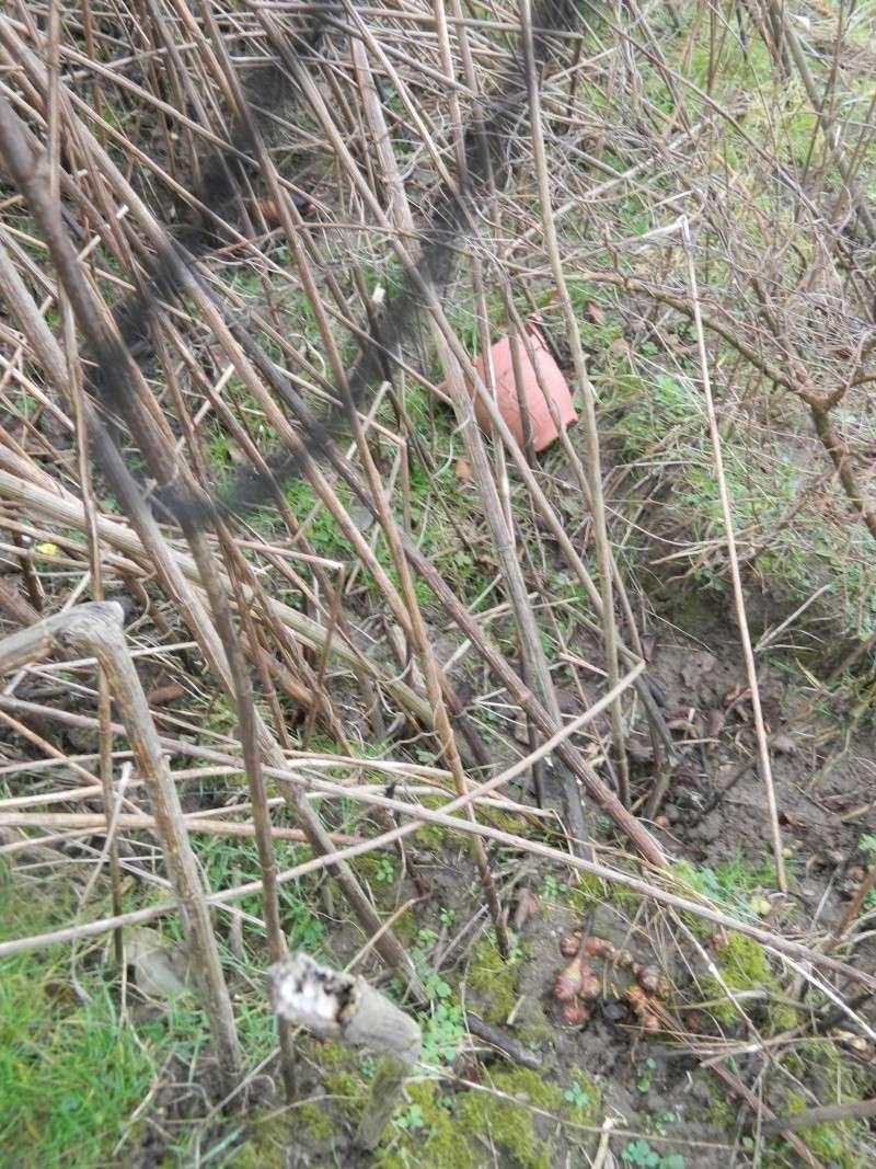 Mon quidam saison 2014 au jardin forum de jardinage - Petit insecte rouge jardin besancon ...