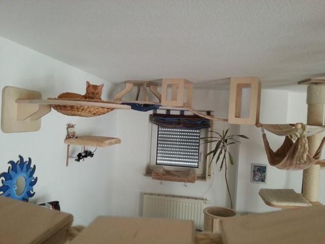 Enrichissement du milieu les meilleurs l ves - Parcours mural pour chat ...