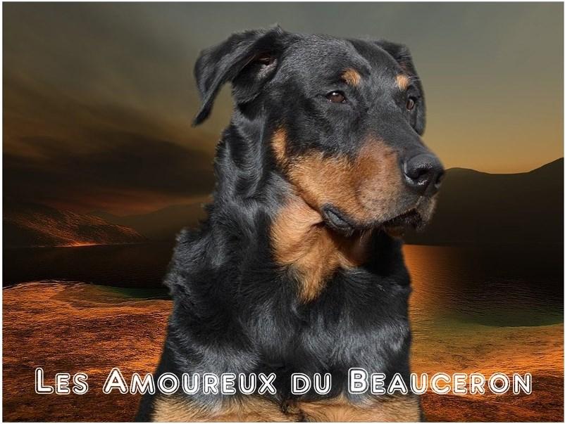 LES AMOUREUX DU BEAUCERON