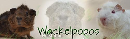 wackelpopos.de