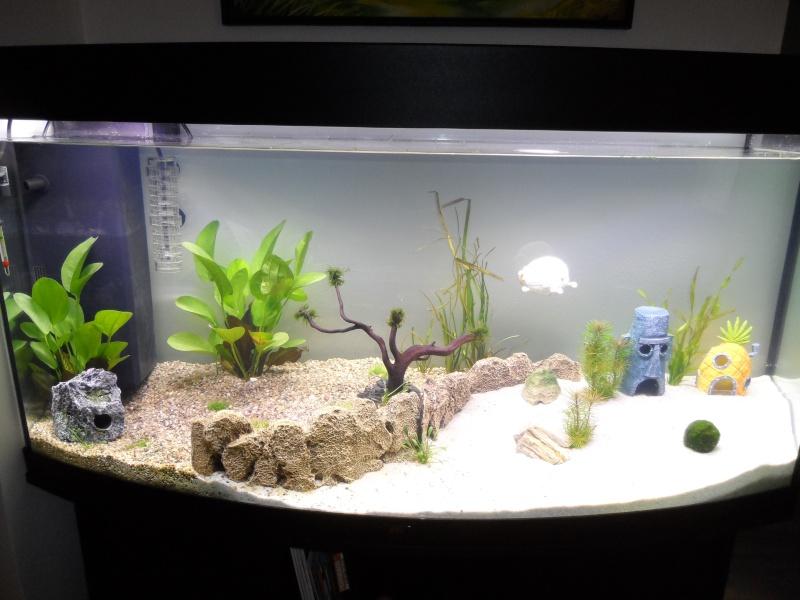 mein neues aquarium 260 liter. Black Bedroom Furniture Sets. Home Design Ideas