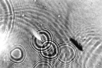 Des ronds dans l'eau dans MOMENT DE VIE 17900111