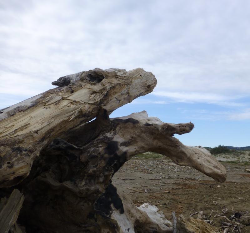 Des chevaux de bois salé dans GRUISSAN chevau10