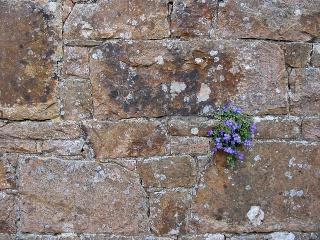 Quand les murs se fissurent dans MOMENT DE VIE flower10