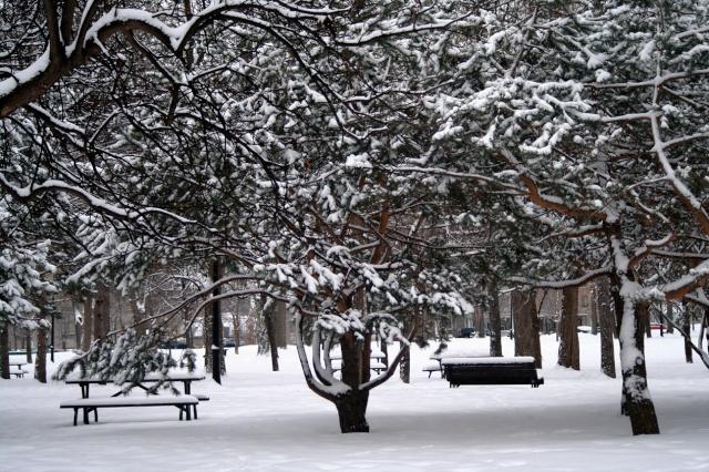 Les neiges d'antan dans LES 4 SAISONS il-nei10