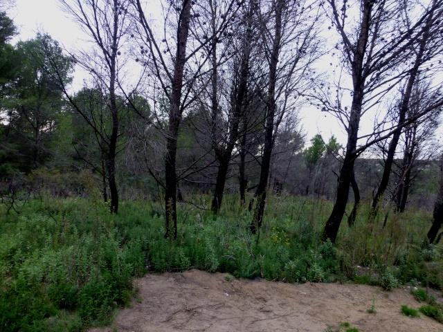Forêt noire dans GRUISSAN p1070110