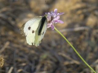 Ici, je me sens papillon dans GRUISSAN p1070212