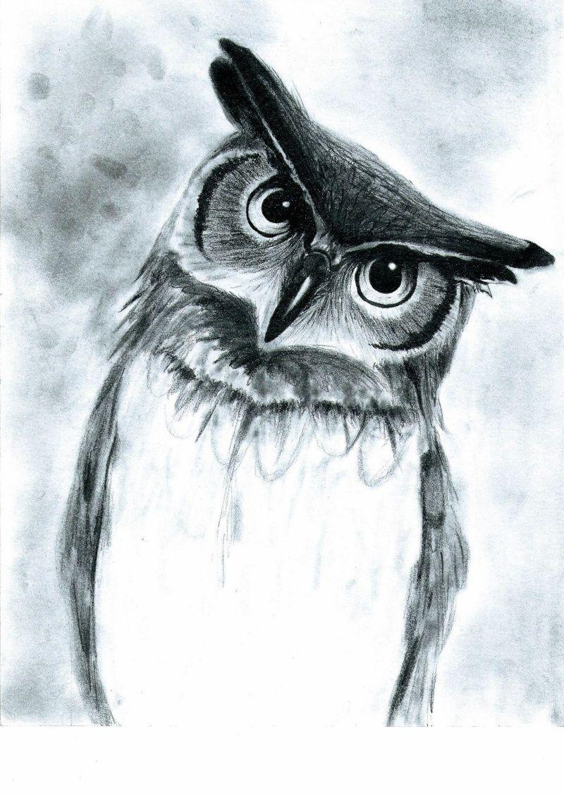 Hibou - Hibou en dessin ...