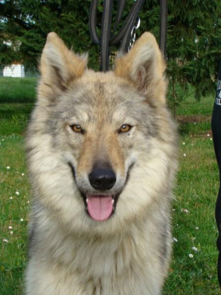 """Super Notre espèce de """"chien""""canis winven PS26"""