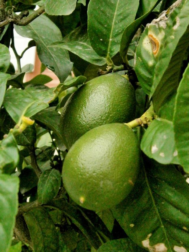 citrus25.jpg