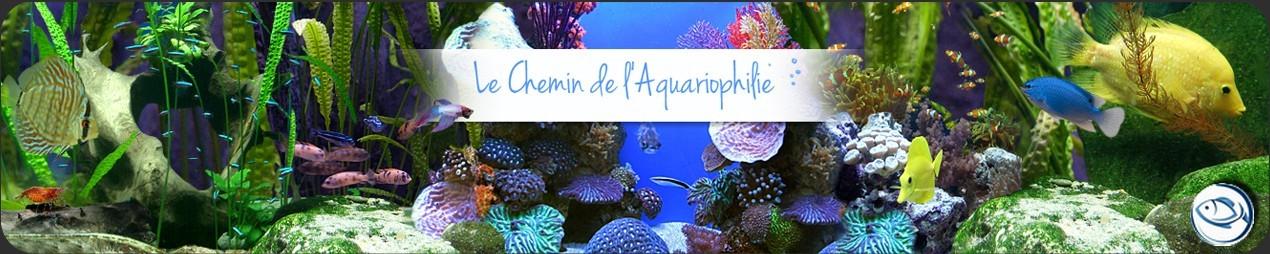 Vente d 39 ampullaire interdite for Vente aquariophilie