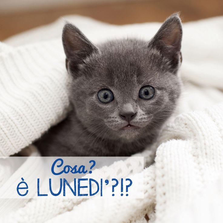 Lunedi 3 marzo salutiamoci in questa sezione pagina 2 for Buongiorno con gattini