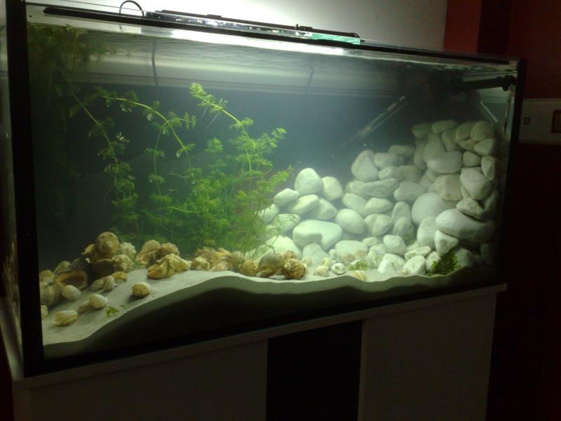 Id e d co aquarium 200l - Decoration pour aquarium d eau douce ...