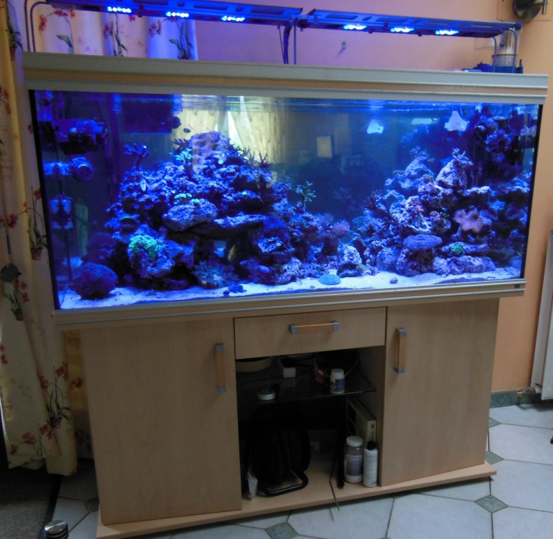 Vends aquarium r na meuble 450 l gironde 350 forum for Aquarium rena