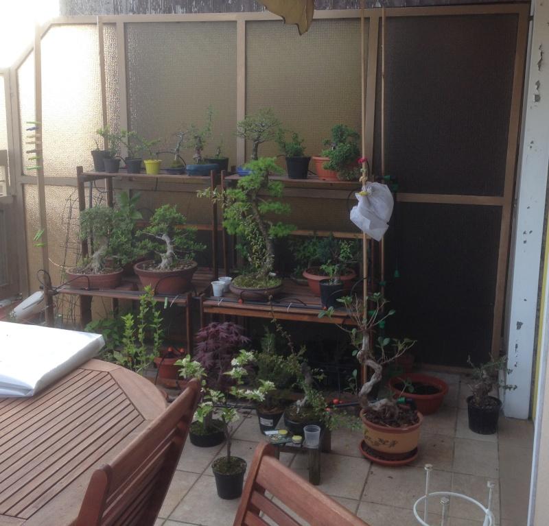 Dove coltiviamo i nostri bonsai pagina 19 for Dove comprare bonsai