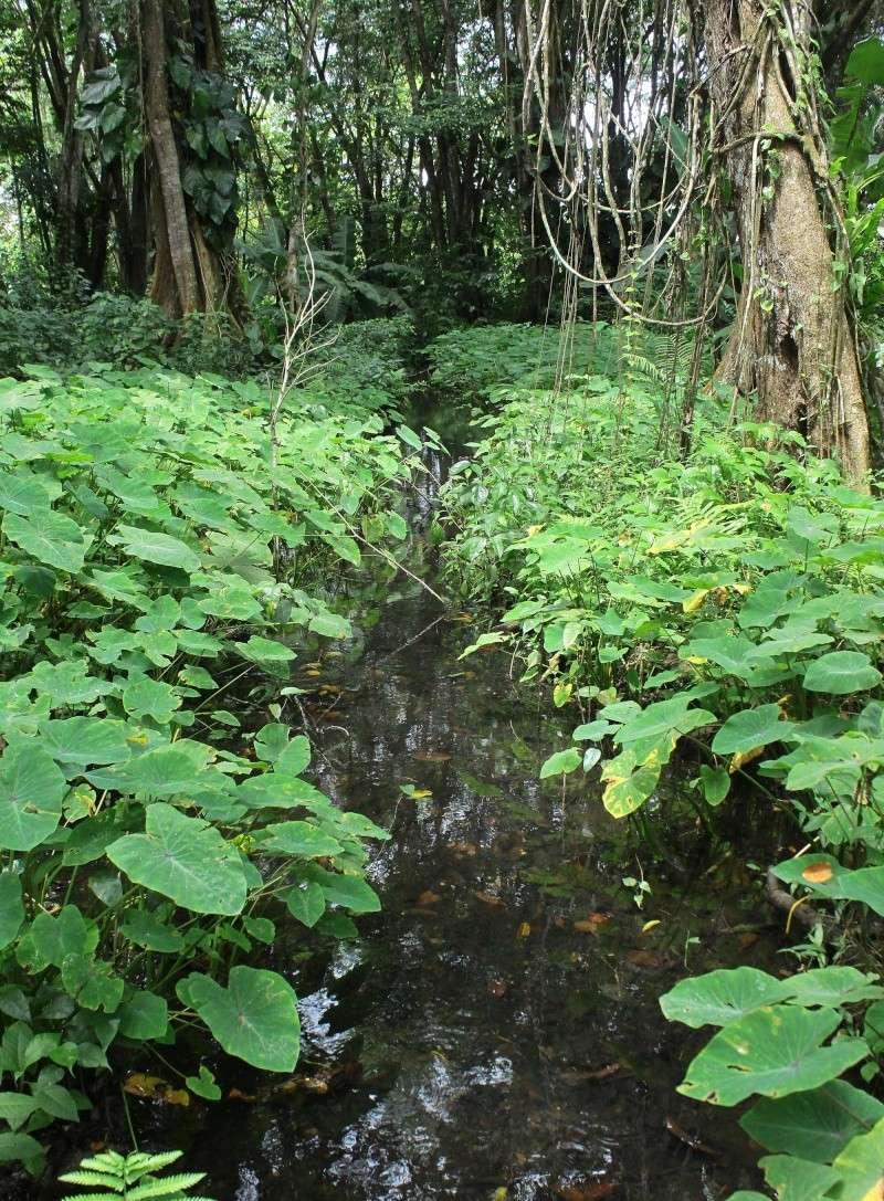 biotope guadeloupe