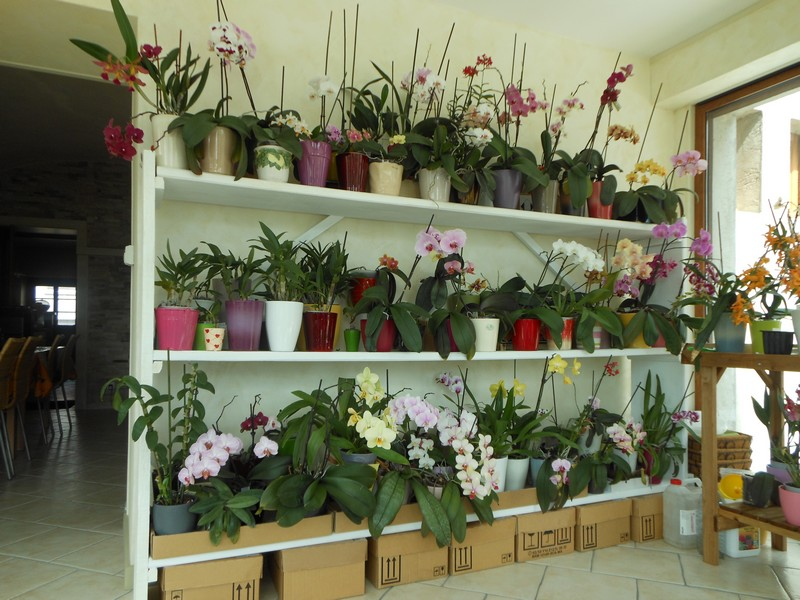 les orchid es de nounoucaro maj 08 05 14 page 3. Black Bedroom Furniture Sets. Home Design Ideas