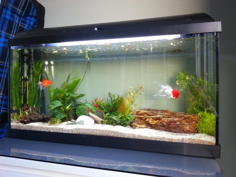 96l pour mes orandas igor et albert for Gros poisson aquarium