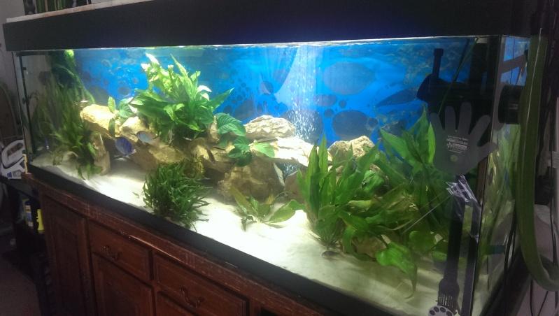 Mon aquarium 600l for Aquarium 600l