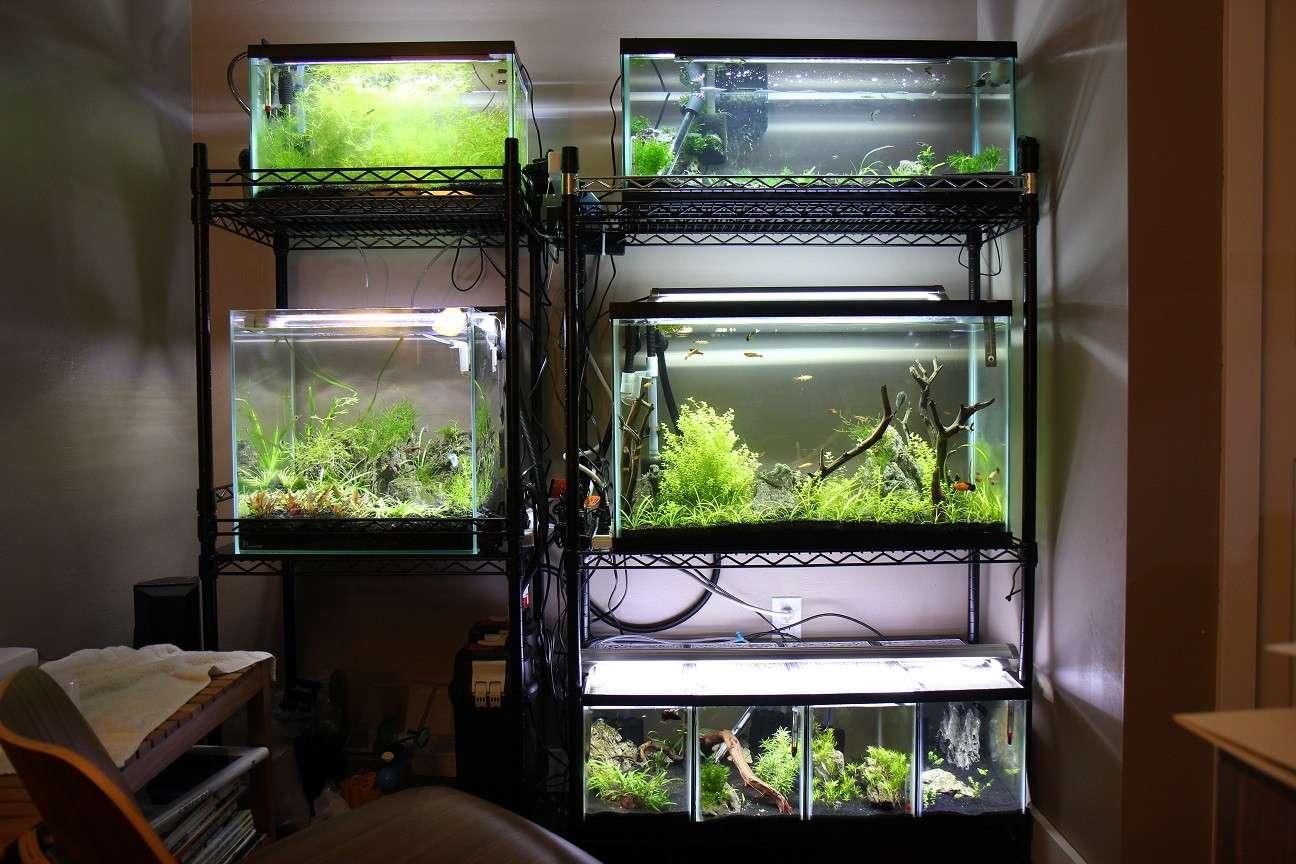 Safe Multiple Aquarium Racks Wafishbox