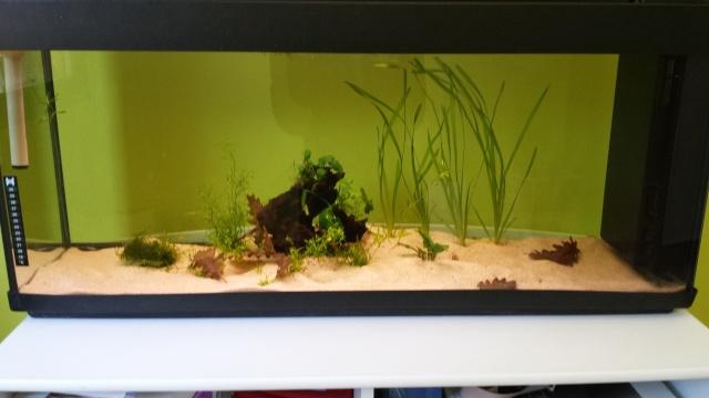 aquadico profil nicolas13013. Black Bedroom Furniture Sets. Home Design Ideas