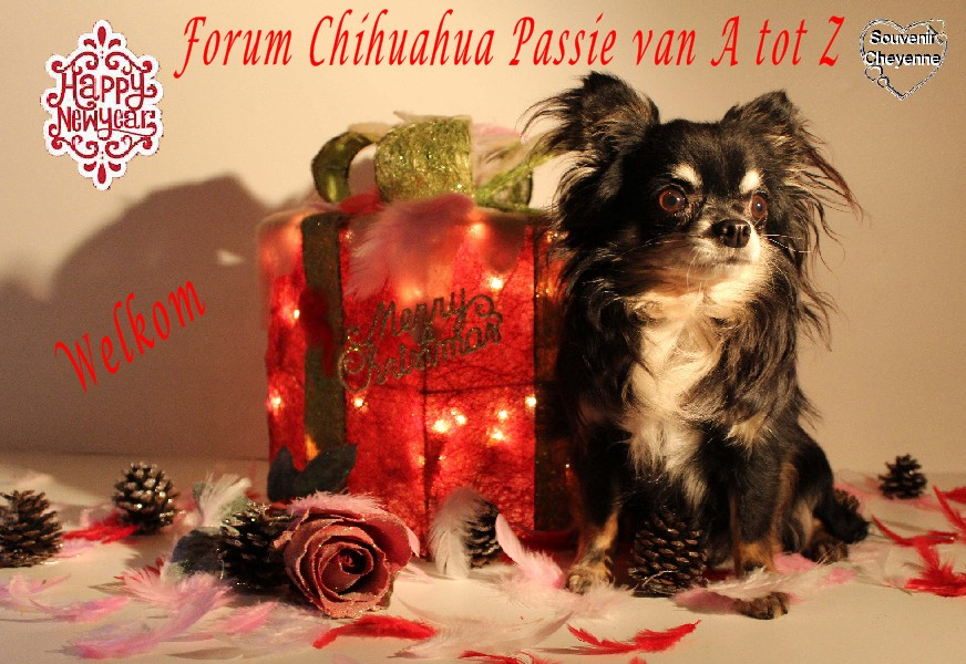 Chihuahua-passie van A tot Z
