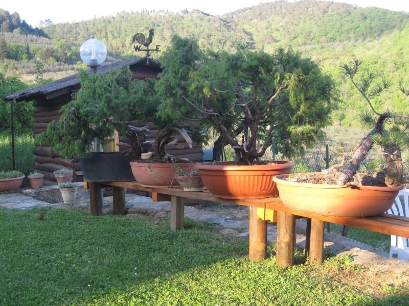 Dove coltiviamo i nostri bonsai pagina 22 for Dove comprare bonsai