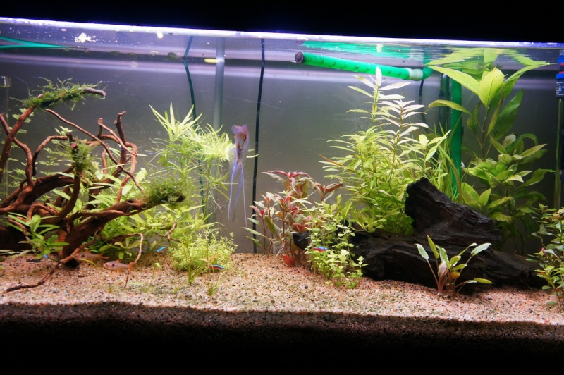 sable a aquarium sable a aquarium algue sur le sable. Black Bedroom Furniture Sets. Home Design Ideas