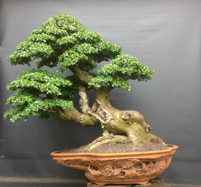 Indonesian Bonsai Page