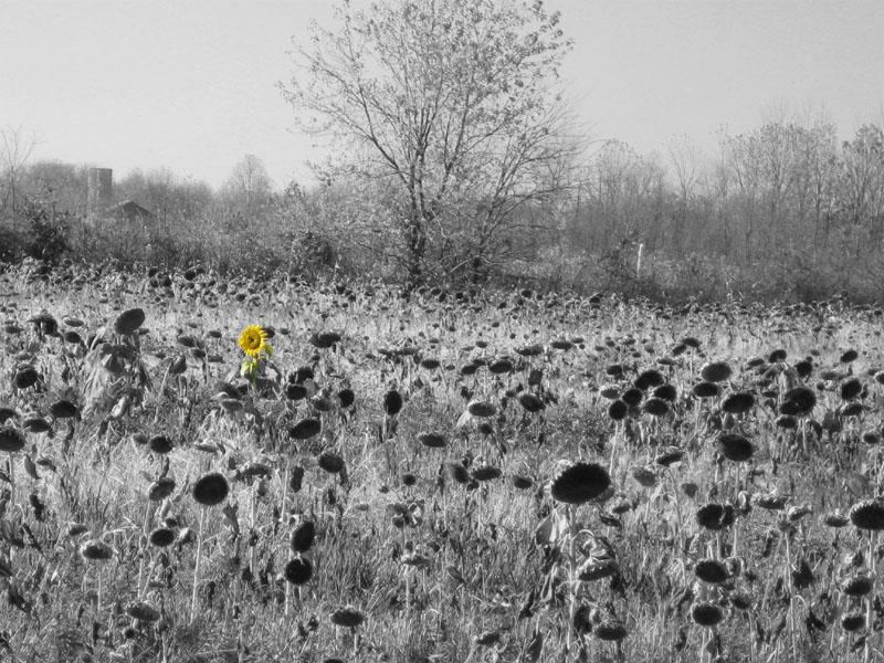 The Dead Flower Field