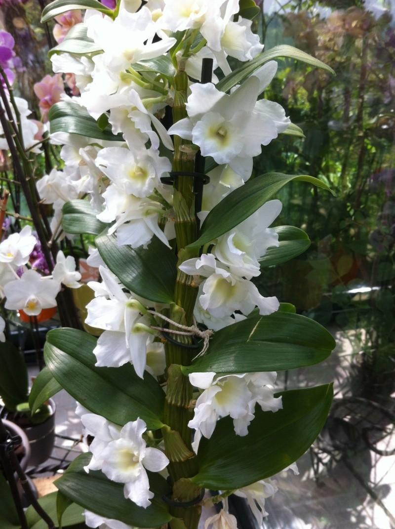 orchid18.jpg